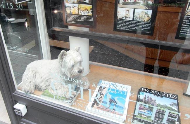 собака в Париже
