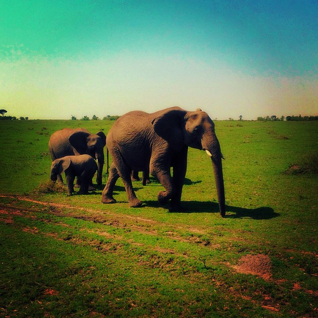 http://happytravelling.org/wp-content/uploads/2014/09/кения6.jpg