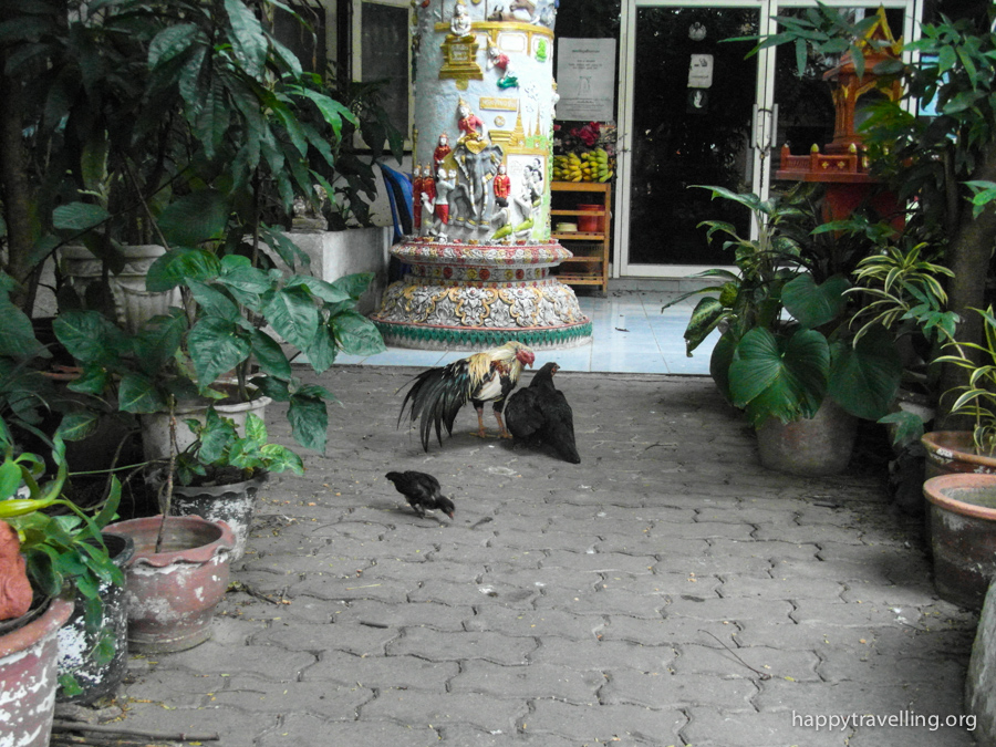 курица в храме