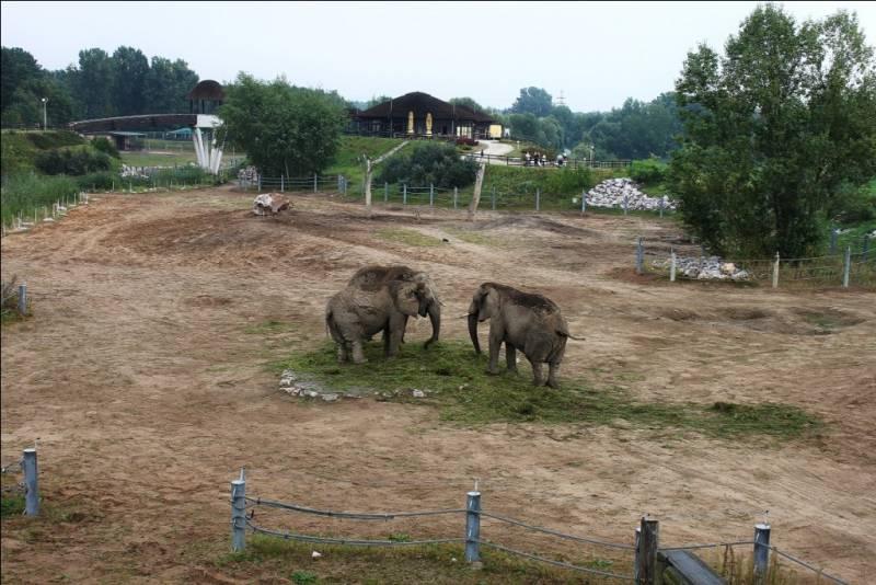 зоопарк в Познани
