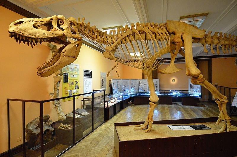 музей эволюции в Варшаве