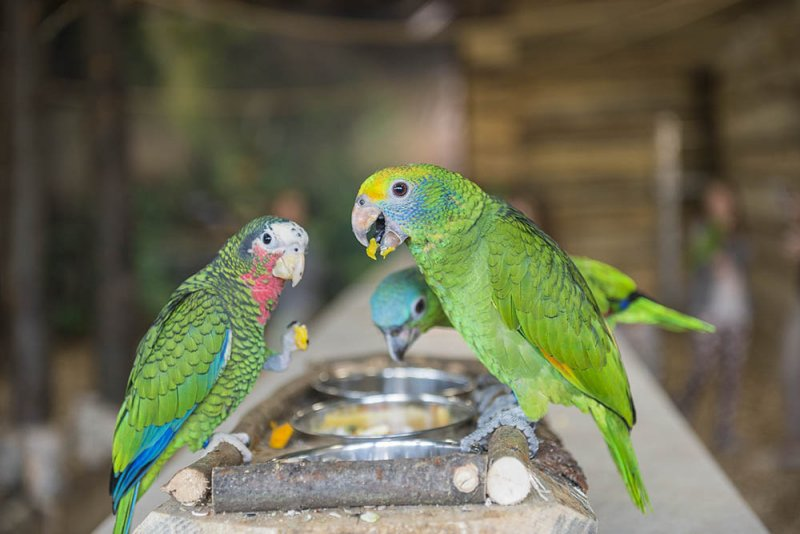 попугаи в варшаве