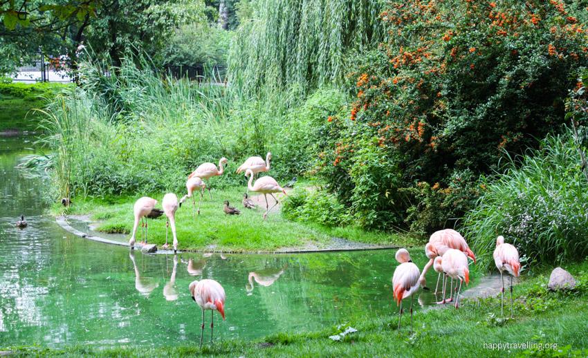 фламинго в зоопарке