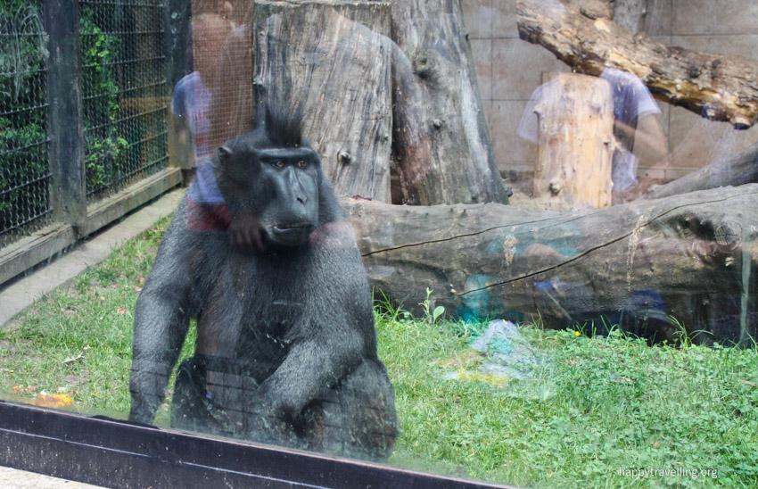 обезьяна в зоопарке варшава