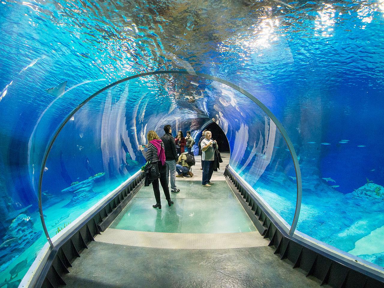 аквариум во Вроцлавском зоопарке