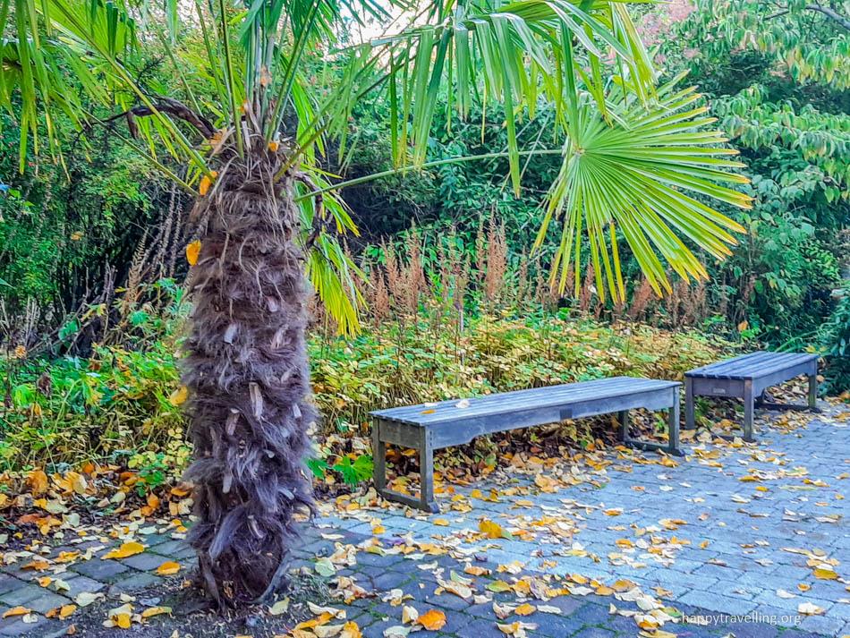 эдинбург пальма