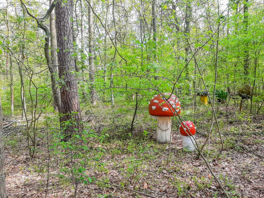 огромные грибы под варшавой