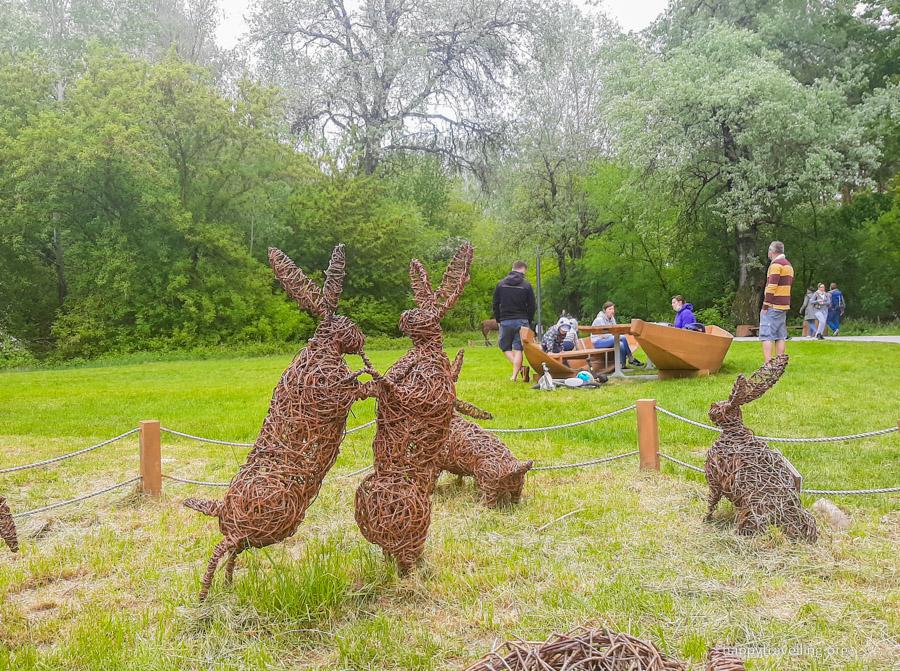 зайцы в лесу под Варшавой