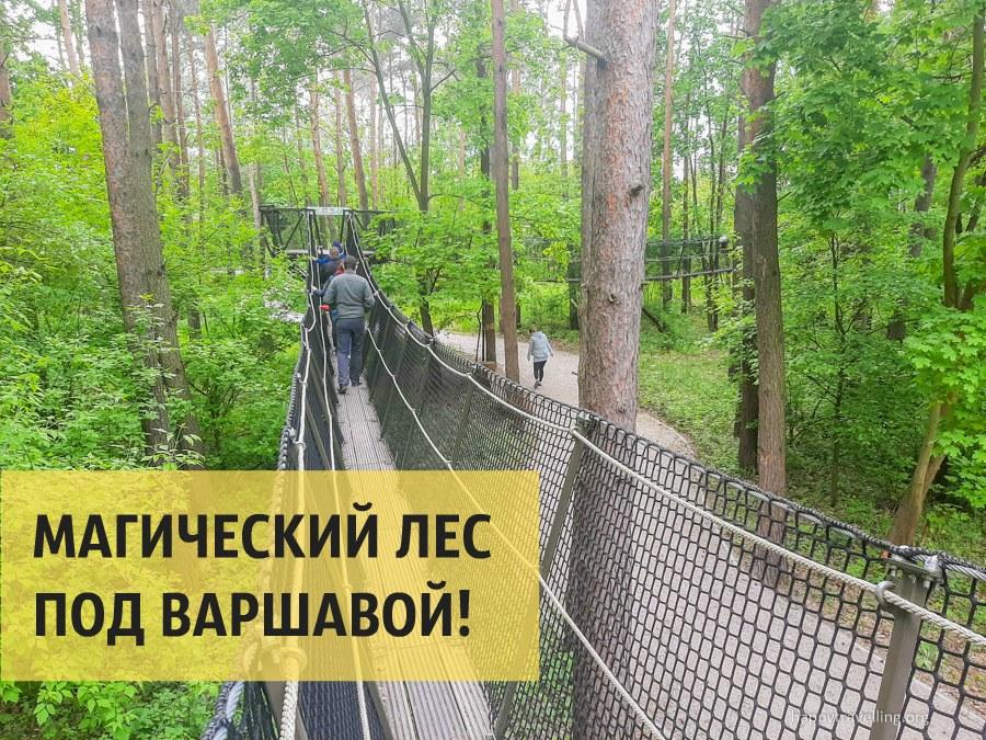 Магический лес рядом с Варшавой!